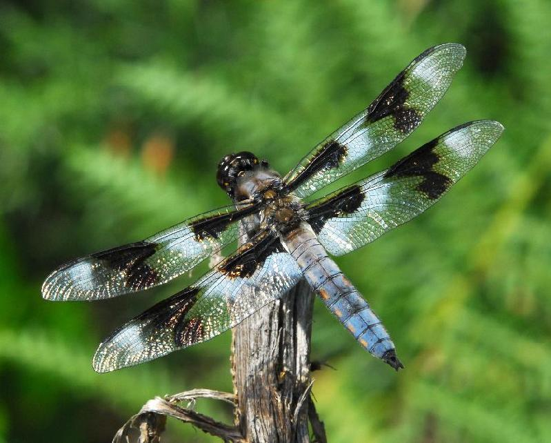 Dragonfly - Bandon, Oregon